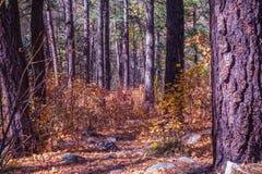 Sedona hermoso Arizona en Sunny Autumn Day Fotos de archivo libres de regalías