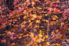 Sedona hermoso Arizona en Sunny Autumn Day Foto de archivo libre de regalías