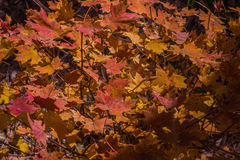 Sedona hermoso Arizona en Sunny Autumn Day Imágenes de archivo libres de regalías