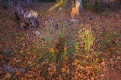 Sedona hermoso Arizona en Sunny Autumn Day Imagenes de archivo