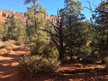 Sedona Hiking Trail Bell. Sedona hiking trail in Arizona red rocks Stock Images