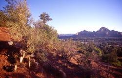 Sedona kaktus i Rockowe formacje zdjęcia royalty free