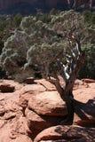Sedona krajobraz w Arizona Zdjęcie Royalty Free