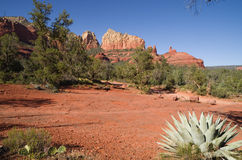 Sedona Landscape Royalty Free Stock Images