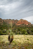 Sedona and Oak Creek Canyon Lanscapes. Red rocks of Sedona and Oak Creek Canyon royalty free stock photography