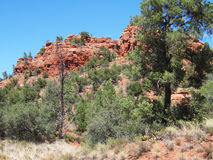 Sedona Red Rocks Royalty Free Stock Photo