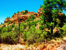 Sedona Wild Landscape with red rocks. Of juniper trees and yucca plants Royalty Free Stock Photos