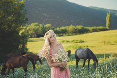 Seductive blond blue eyes lady woman in pinky airy dress on meadow of daisy chamomile holding bouquet of nflowers in hands and pos royalty free stock photos