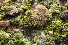 Sedum close-up. Close up of sedum and plants royalty free stock images
