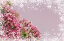 Sedum flowers bouquet Royalty Free Stock Photo