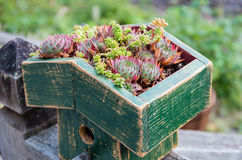 Sedum plants covering the roof Royalty Free Stock Photo