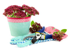 Sedum spectable plant flowers with gardening tools Stock Photo
