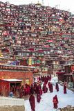 Sedums, Sichuan, porcelaine-mars 08,2016, moines ? l'universit? buddhish de sedums images stock