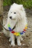 Seduta bianca del cane legata ad un albero Immagine Stock Libera da Diritti