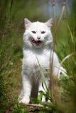 Seduta bianca del gatto Fotografie Stock