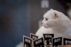 seduta bianca sveglia del gatto fotografia stock