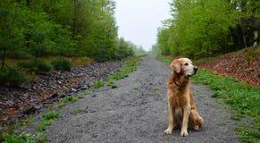 Seduta del cane Immagine Stock Libera da Diritti