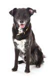 Seduta del cane nero Fotografia Stock