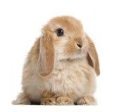Seduta del coniglio fotografie stock