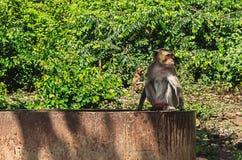Seduta della scimmia immagine stock