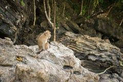 Seduta della scimmia Fotografia Stock