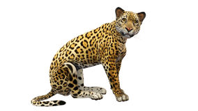 Seduta di Jaguar, animale selvatico isolato su fondo bianco Fotografia Stock Libera da Diritti
