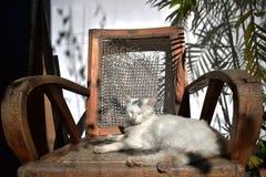 Seduta e sonno bianchi svegli del gatto sulla sedia, nuova foto 2018 fotografia stock