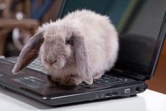 Seduta grigia decorativa del coniglio su un computer portatile Immagini Stock Libere da Diritti