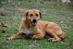 Seduta stanca del cane Fotografie Stock