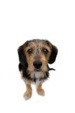 Seduta sveglia del cane del cucciolo fotografie stock