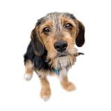 Seduta sveglia del cane del cucciolo immagine stock libera da diritti