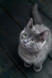 Seduta sveglia del gattino Immagine Stock