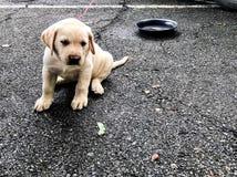 Seduta sveglia del piccolo cane sola sulla via Fotografie Stock Libere da Diritti