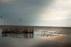 Seeâ€-‹seagulls†‹at†‹Bangâ€-‹PU stockfoto