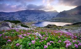 See auf Berg und Blumen Stockbild