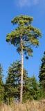 See Baikal auf Hintergrund Lizenzfreie Stockbilder