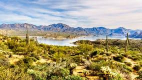 See Bartlettbirne, die durch die Berge und viel Saguaro und andere Kakteen in der Wüste umgeben wird, gestalten landschaftlich Stockfotografie
