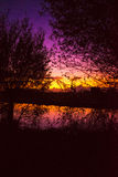 See the beauty trough the trees. Sunset reflection purple blue evening Royalty Free Stock Photo
