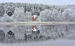 See Bijote, regionaler Park Kurtuvenai Stockfoto