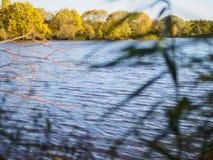 See in den Schilfen Auf der anderen Seite sind gelbe Bäume stockbilder