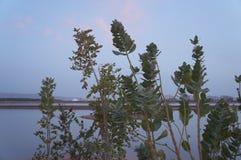 See in der Sonnenuntergangzeit, fast Nacht Lizenzfreie Stockbilder