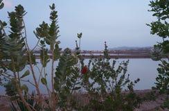 See in der Sonnenuntergangzeit, fast Nacht Lizenzfreies Stockbild