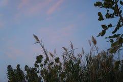 See in der Sonnenuntergangzeit, fast Nacht Stockfotografie