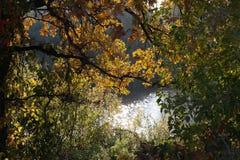 See in einem Wald Stockfoto