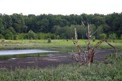 See für trocknendes Abwasser Schmutziges Abwasser in der Kläranlage Der Abfluss in der Industrie Lizenzfreie Stockfotografie