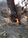 See-Feuer | San Bernardino Mountains | Big Bear | Sommer von 2015 Stockfoto