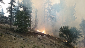 See-Feuer | San Bernardino Mountains | Big Bear | Sommer von 2015 Stockfotos