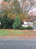See Forest Park Lizenzfreies Stockfoto