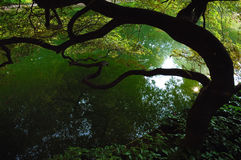 See-Garten Lizenzfreie Stockfotos