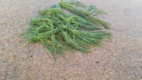 See grass royalty free stock photo
